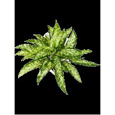 Аглаонема / Aglaonema растение искусственное