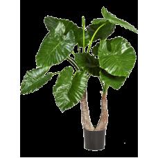 Алоказия Калидора / Alocasia calidora растение искусственное
