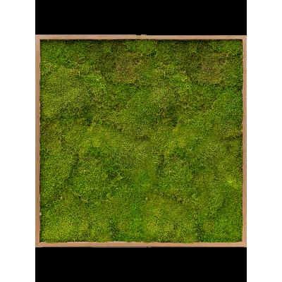 Bamboo 100% flat moss