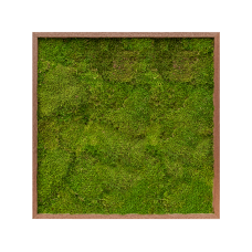 Meranti 100% flat moss