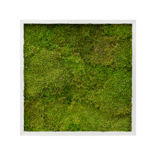 Aluminum 100% flat moss