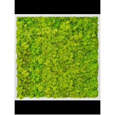 Aluminum 100% reindeer moss (spring green)