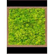 Meranti 100% reindeer moss (spring green)