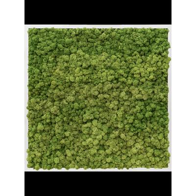 Aluminum 100% reindeer moss (forest green)