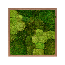 Meranti 30% ball moss (natural) and 70% flat moss